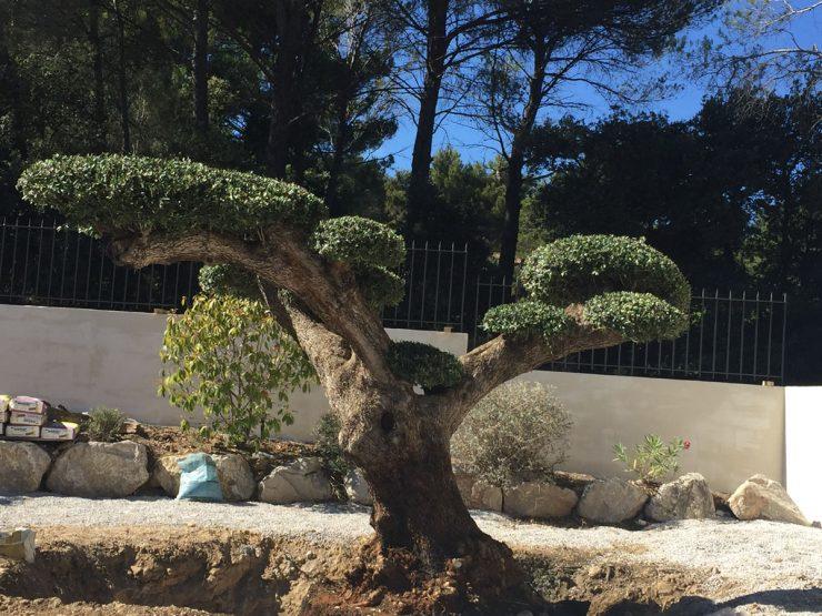 aménagement de jardin par sud créations paysages
